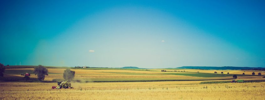 sky-field-summer-agriculture